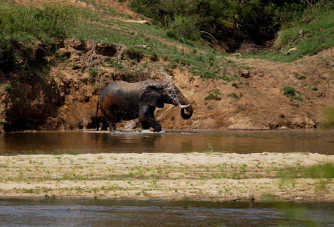 Tau Elephant