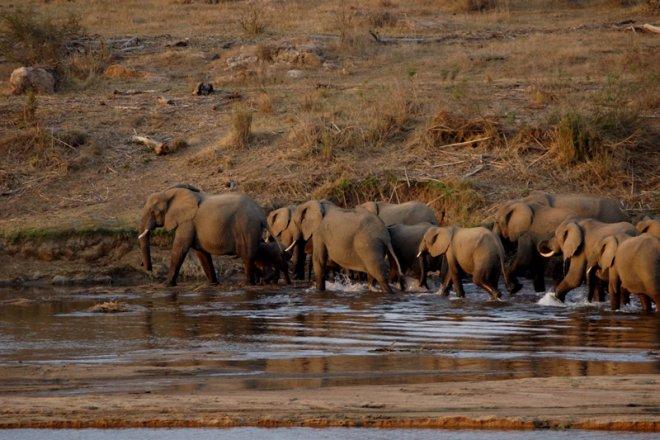 Tau Elephants