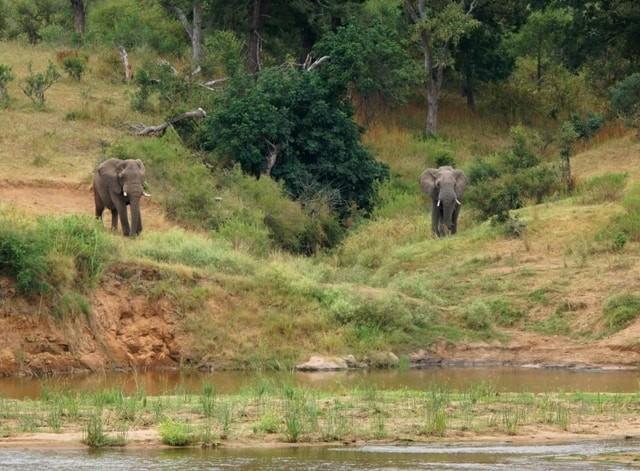 elephant bulls rs