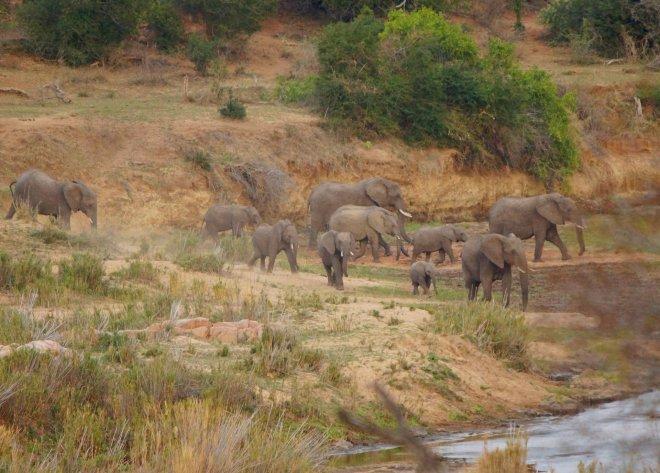 KRSC - Elephants